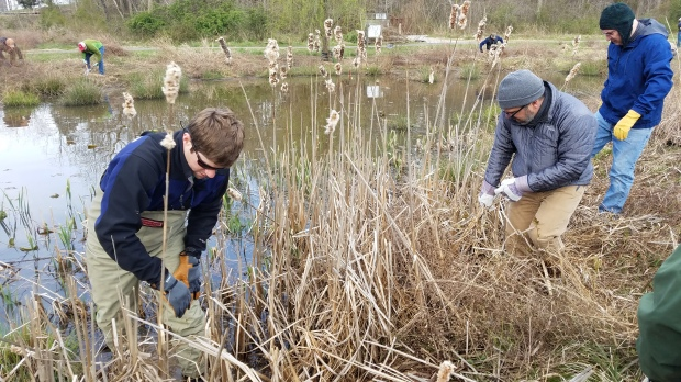 StormwaterWetlandVolunteerMaintenance